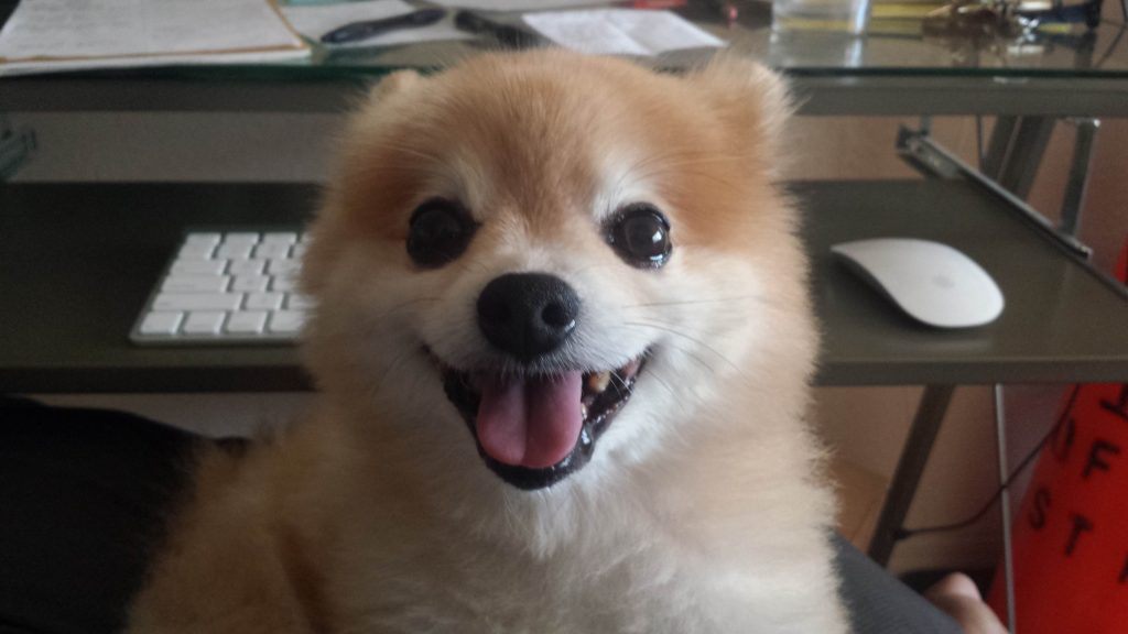 dog friendly st pete
